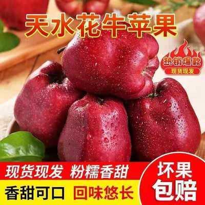 甘肃天水花牛苹果水果新鲜当季10斤红蛇果整箱应季红苹果包邮5斤