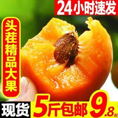 大黄杏装新鲜当季时令酸甜水果蜜金太阳杏子5/2/3斤整箱包邮