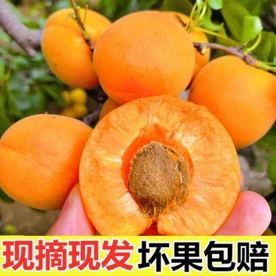 新鲜陕西大黄杏金太阳杏酸甜杏孕妇水果应季水果杏子酸杏非贵妃杏