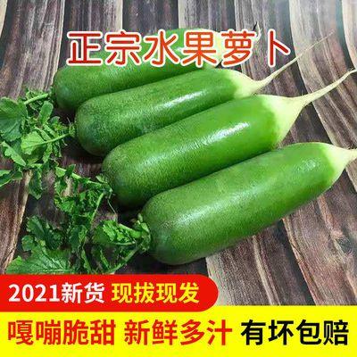 37849/【现拔新货】水果萝卜生吃甜脆 潍县沙窝萝卜水果青萝卜新鲜蔬菜