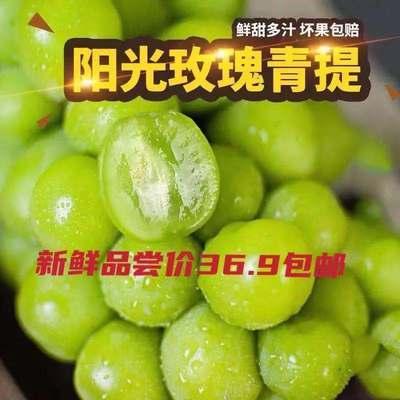 云南现摘阳光玫瑰葡萄香印青提当季水果日本晴王无籽新鲜提子