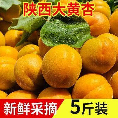 陕西大黄杏熟了新鲜采摘应季时令新鲜水果酸甜杏子金太阳