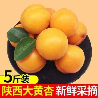 陕西大黄杏熟了杏子新鲜应季新鲜水果时令金太阳包邮