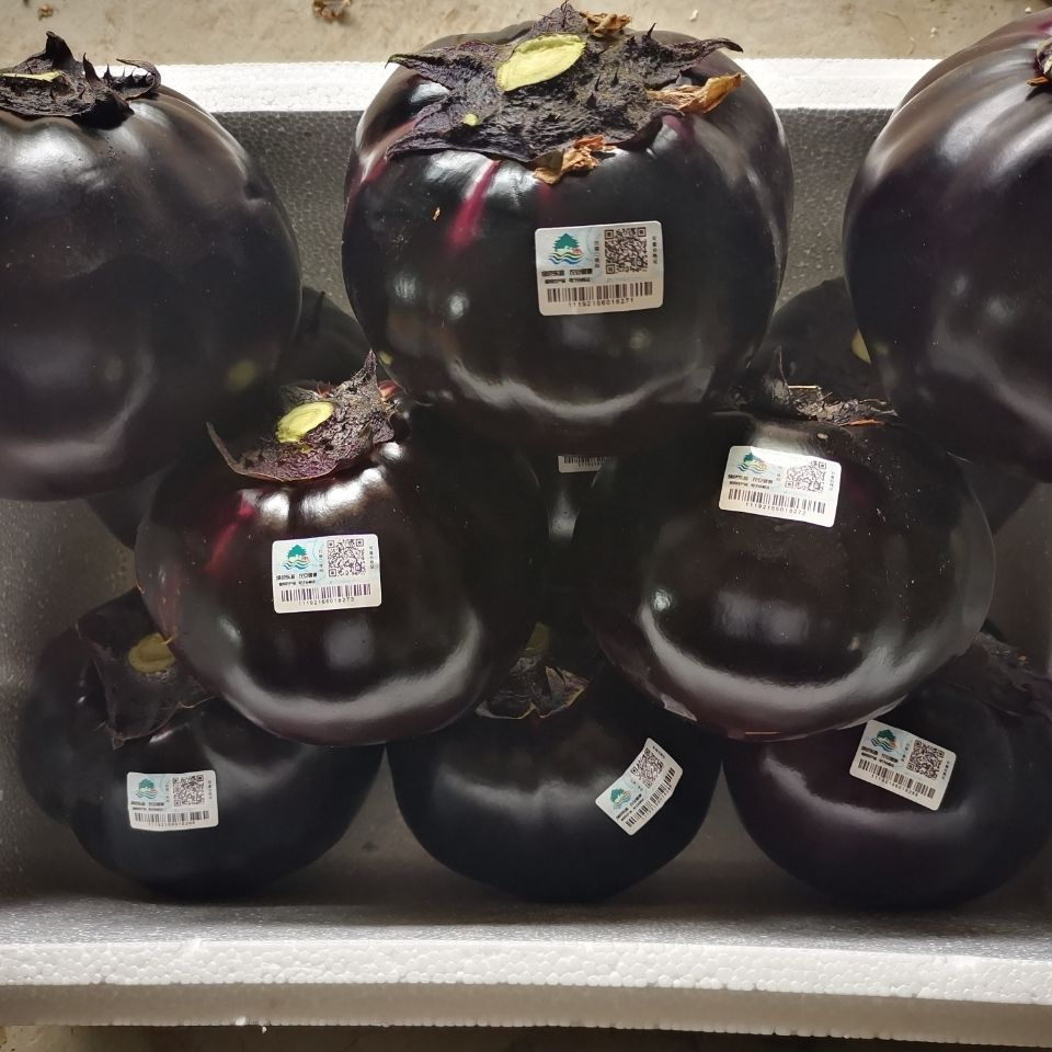 山东莘县现摘现发紫光圆茄新鲜紫皮圆茄子正宗农家茄子新鲜蔬菜