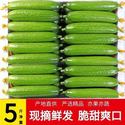 山东水果黄瓜新鲜农家当季现摘清脆非小青瓜包邮蔬菜生吃小黄瓜