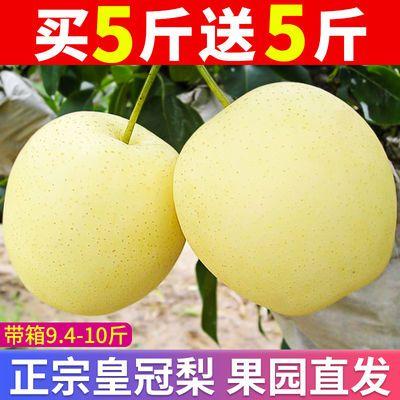 29334/【精品】河北皇冠梨10斤装应季水果梨子5斤10斤非砀山梨酥梨香梨F