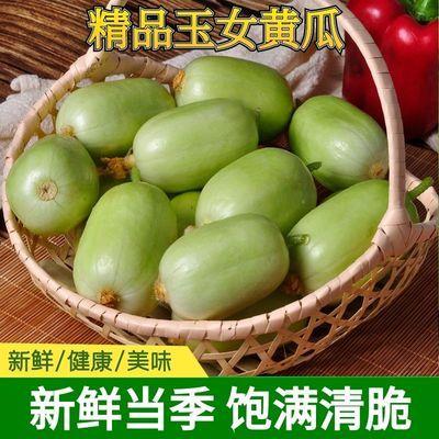 【超好吃】山東現摘玉女黃瓜拇指黃瓜水果黃瓜生吃新鮮蔬菜包郵