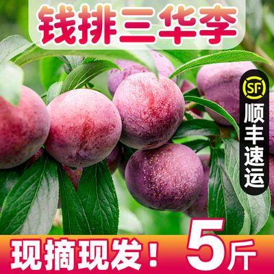 【顺丰包邮】三华李红心李子新鲜水果整箱包邮1/3/5斤三华李批发