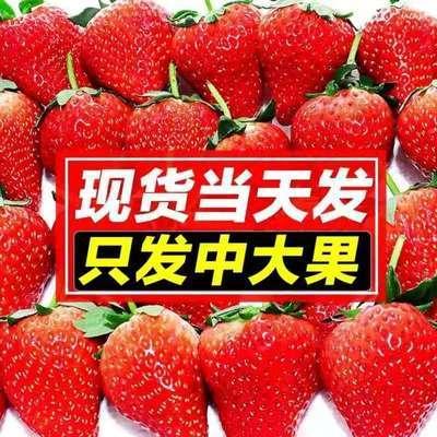 云南四季新鲜酸草莓双流冬草莓烘焙同城水果茶饮料批发包邮商用