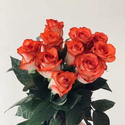 鲜花胭脂扣玫瑰,一扎15支5支防损实发20支。