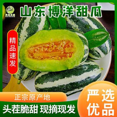 山东甜瓜博洋9号新鲜水果现摘现卖孕妇应季水果香瓜蜜瓜脆瓜甜瓜