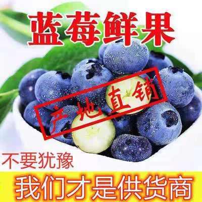 39514/河南新鲜蓝莓鲜果水果蓝梅果大果批发宝宝辅食护眼加纯汁香甜可口