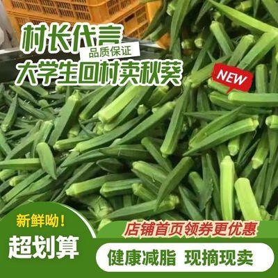【精品】新鲜秋葵农家有机鲜嫩蔬菜水果黄秋葵现摘现发