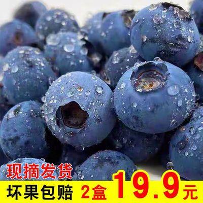 39545/新鲜蓝莓鲜果当季蓝梅大果国产孕妇时令水果胜进口超大甜山东蓝梅