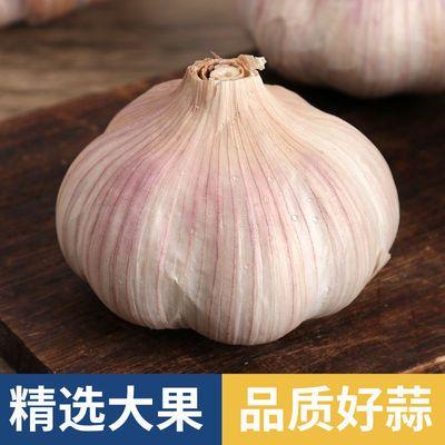 2021新鲜紫皮大蒜头河北大蒜农家多瓣鲜蒜独头干蒜祘5斤10斤整箱