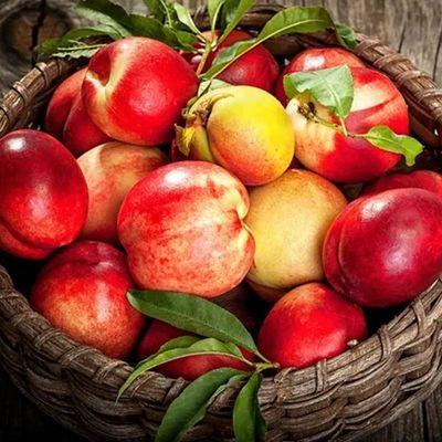 黄心油桃应季大桃子新鲜现摘蜜桃孕妇水果整箱批发非黄桃毛桃