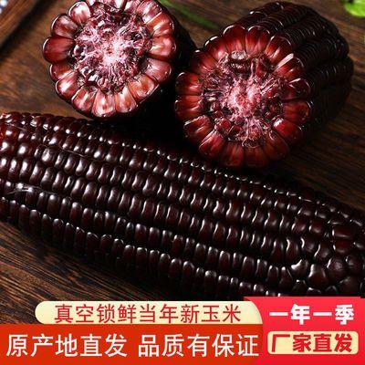 东北新鲜黑糯玉米甜糯玉米棒子整箱批发真空包装