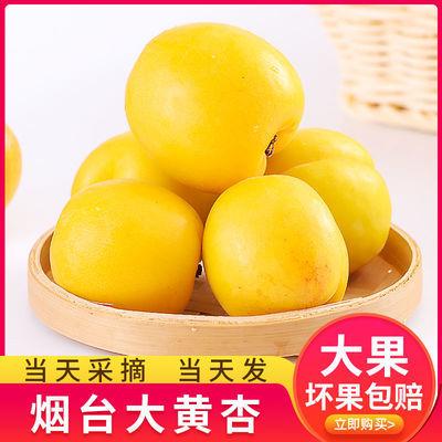 【顺丰包邮】山东大黄杏放软吃软糯香甜杏梅单果50g起