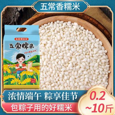 36100/五常香糯米新米圆粒糯米江米东北特产批发包粽子酿酒糍粑自种糯米