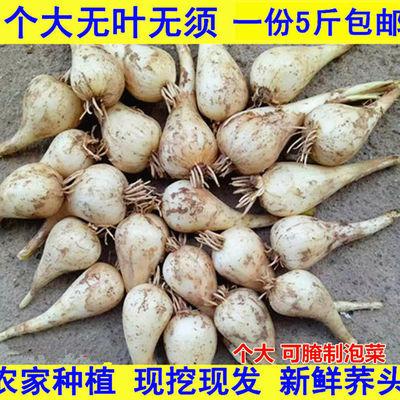 78972/新鲜藠头荞头江西茭头农家自种新鲜现挖叫头野生大教头包邮
