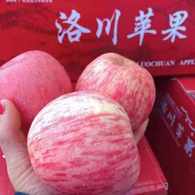 陕西延安冷库洛川套袋富士苹果75-85毫米直径大小净果2-5.5斤包邮