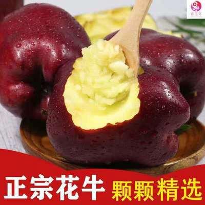 甘肃天水花牛苹果新鲜水果当季水果红蛇果整箱粉面平果包邮