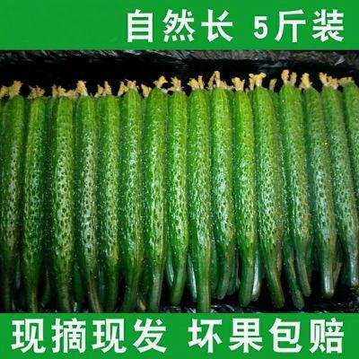 现摘现发新鲜带刺水果黄瓜新鲜生吃清脆可口当季整箱包邮3/5斤【6月12日发完】