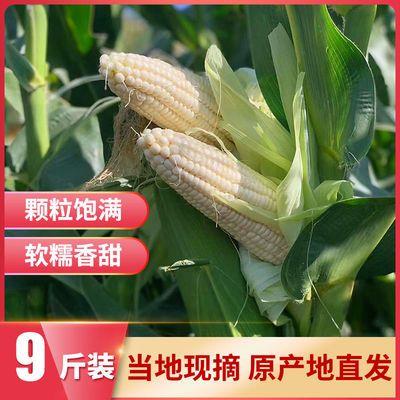 重庆农家自种现摘新鲜带壳白玉米3斤5斤9斤苞谷苞米软糯香甜包邮