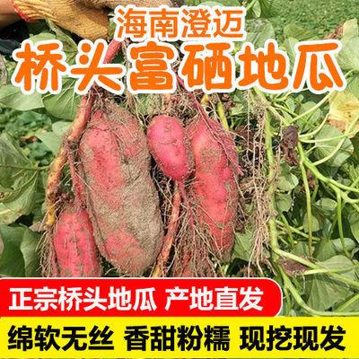 海南澄迈沙地桥头富硒地瓜新鲜红薯现挖农家桥沙板栗薯番薯5/10斤