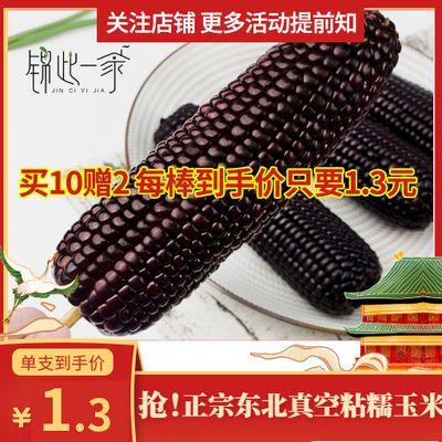 36973/非转基因东北特产新鲜营养一等黑/黄糯玉米真空包装代餐