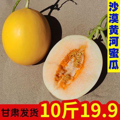 【精品】黄河蜜瓜甘肃沙漠哈密瓜新鲜水果甜瓜当季黄金蜜瓜香瓜