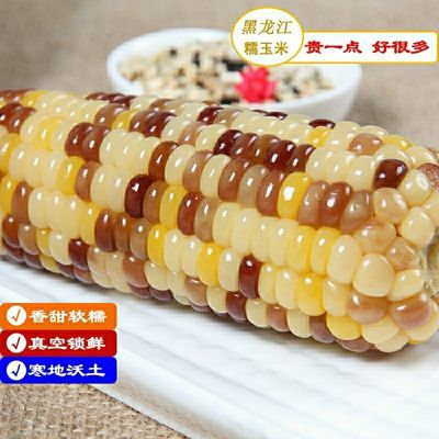包邮 黑糯玉米段东北新鲜甜黏玉米棒粒 杂粮粗粮 健康轻食 早餐