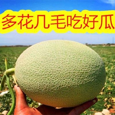 新疆哈密瓜2.5-10斤当季水果脆甜网纹蜜瓜应季水果西州蜜整箱批发