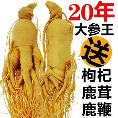 39931/【太便宜参农哭了】真人参野山参新鲜人参片泡酒的药材赠送鹿鞭