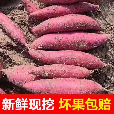 红薯西瓜红沙地蜜薯新鲜现挖地瓜山芋板栗薯糖心薯蔬菜批发软糯