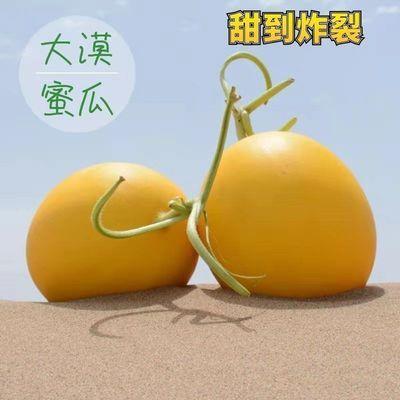 甘肃民勤金红宝蜜瓜黄河蜜哈密瓜新鲜水果甜瓜头茬黄金蜜瓜
