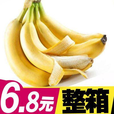 【特价】香蕉新鲜水果云南特产应季香蕉小米蕉高山小香蕉特价包邮