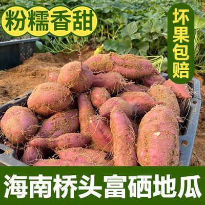 海南澄迈桥头富硒地瓜农家现挖红薯板栗薯山芋新鲜地瓜番薯5/10斤