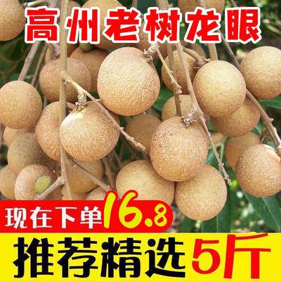 40033/新鲜龙眼桂圆当季水果甜现货广东高州龙眼石硖储良整箱5包邮批发