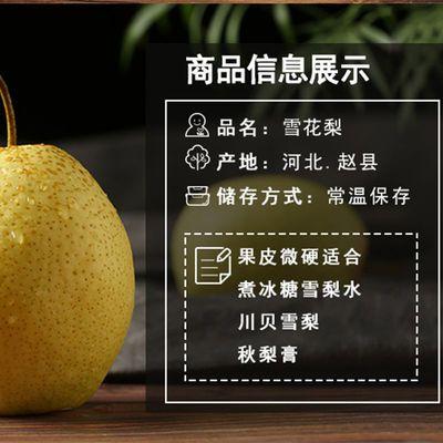 39906/雪花梨赵县脆甜河北应季水果梨批发梨子水果现摘冰糖雪梨