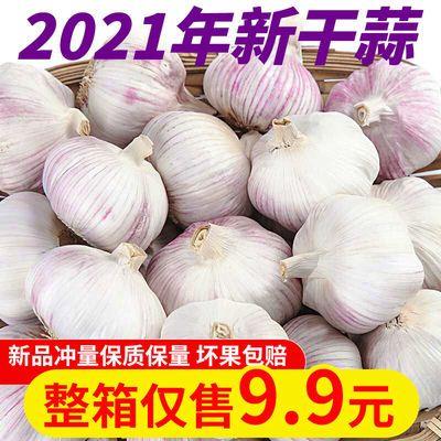 39743/【新干蒜】山东紫白皮大蒜新干蒜大蒜头批发3/5/10斤干紫白皮大蒜