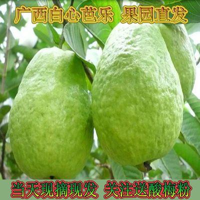 39563/(广西番石榴低糖低脂)白心芭乐番石榴应季新鲜水果批发3/5/8/10斤