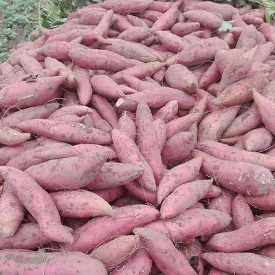 【现挖】红薯新鲜蔬菜批发价红蜜薯5斤糖心西瓜红板栗薯烟薯沙地