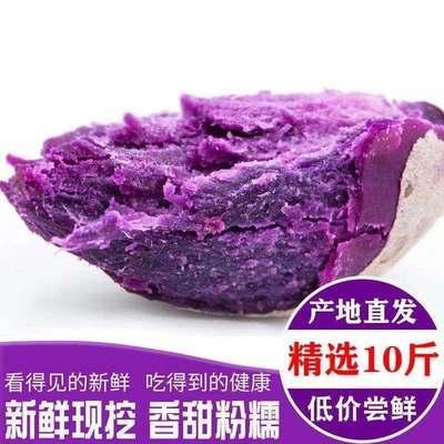 40149/【粉糯香甜 】沙地紫薯新鲜地瓜现挖番薯蔬菜板栗蜜薯非红薯