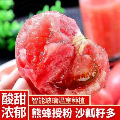 沙瓤西红柿新鲜现摘粉番茄生吃多汁自然熟柿子应季无公害批发包邮