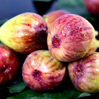 39714/云南无花果3斤净重紫皮红皮当季新鲜孕妇时令鲜水果现摘加冰保鲜