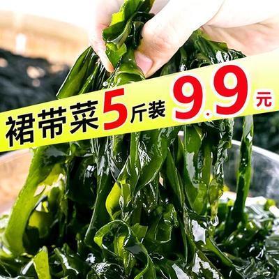 【产地热销】海带盐渍裙带菜海白菜海藻海带丝凉拌菜火锅食材