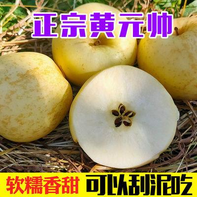 山东烟台黄金帅苹果2斤装(单果75mm起)新鲜水果多仓发货