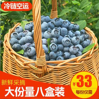 40043/鲜蓝莓果小宝宝专享蓝莓果现摘现发蓝莓甜果护眼佳品