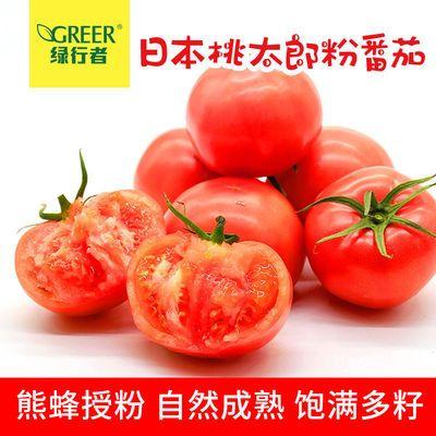 【绿行者】西红柿新鲜现摘大番茄蔬菜水果柿子生吃青粉果5斤装